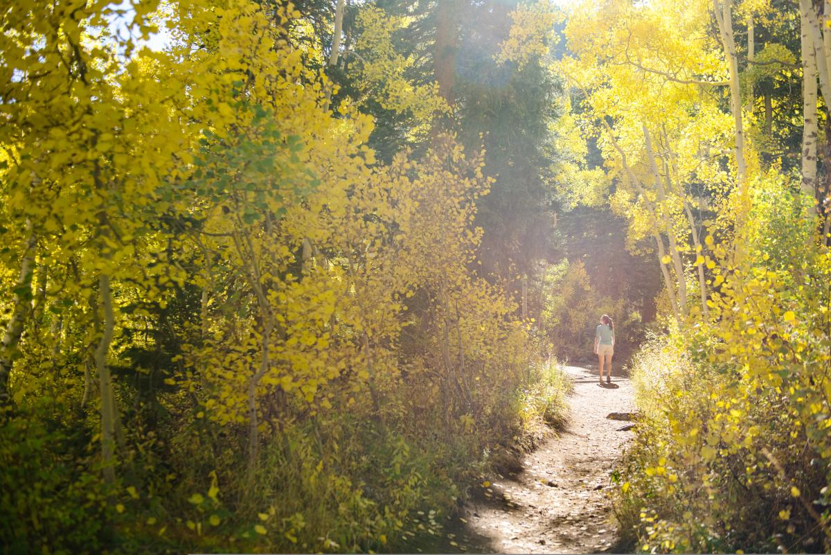 Exploring Big Cottonwood Canyon in the fall is a perfect getaway