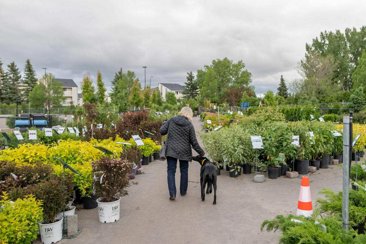 A Woman and Dog in Dutch Growers