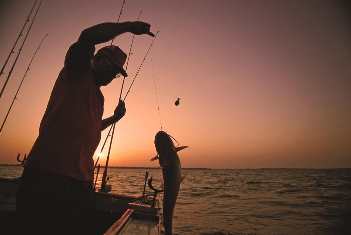 Summer Catfish