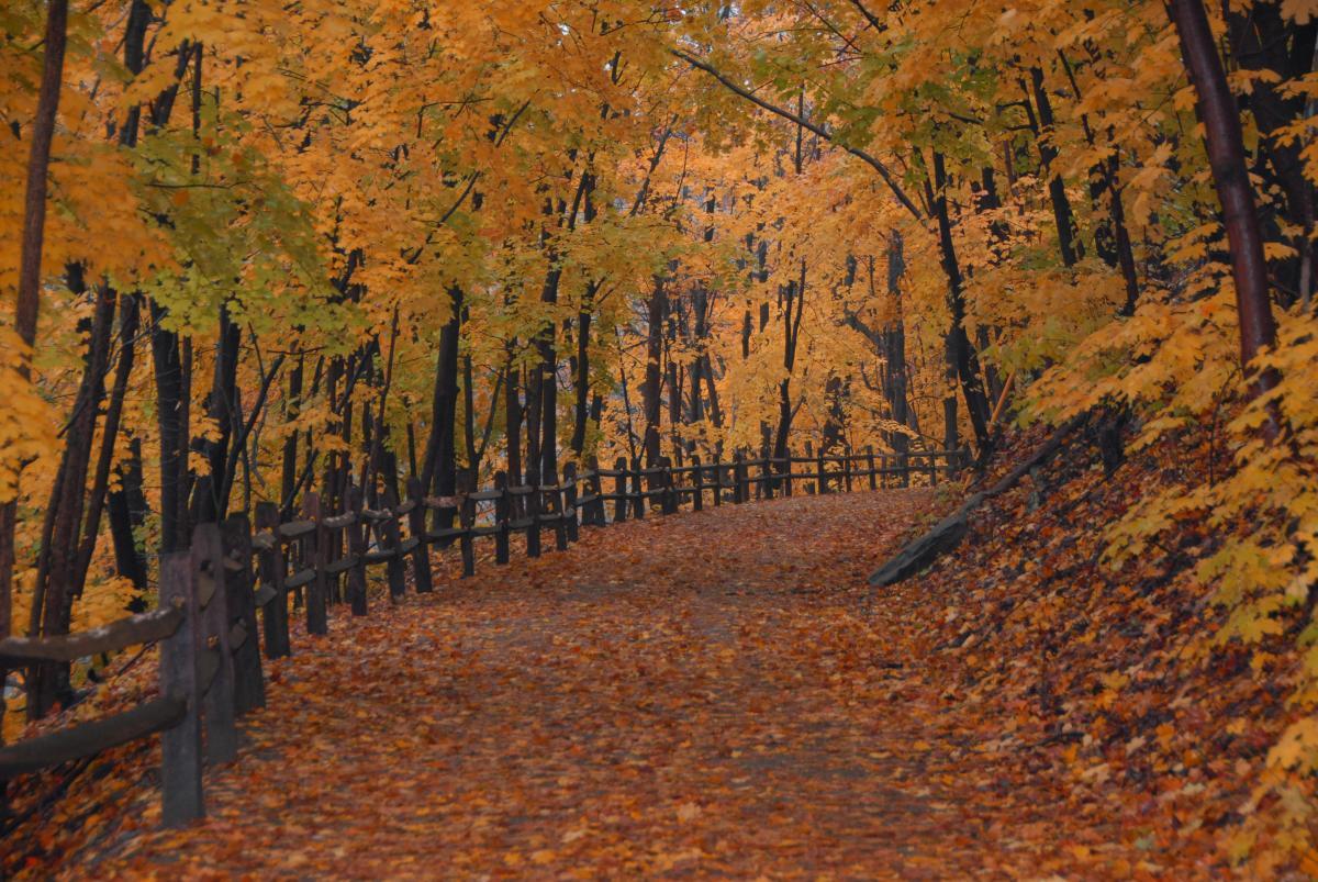 Perkiomen Trail in Fall