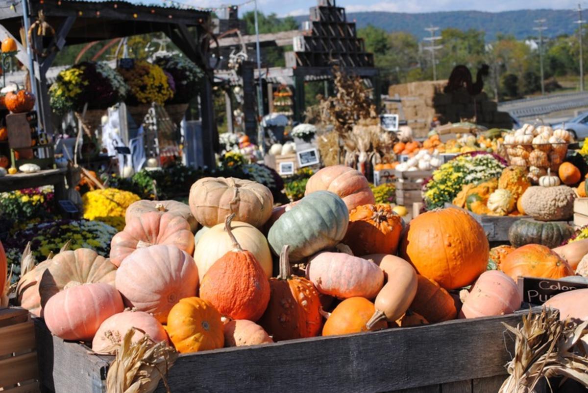 Burnside Farms Fall