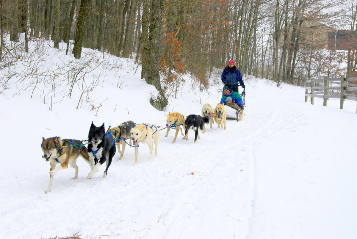 Dog-Sledding-at-Nemacolin-Woodlands-Resort