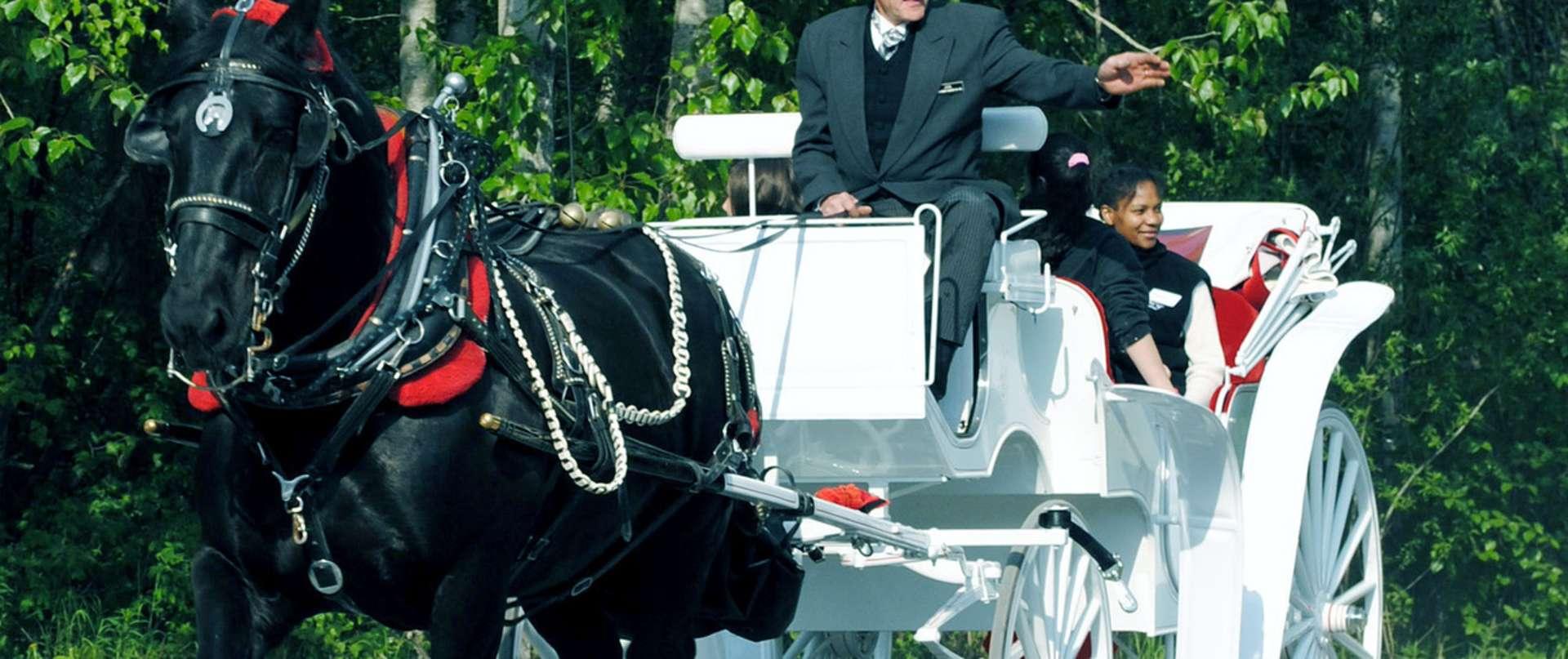 Horse Drawn Carriage Co , LLC