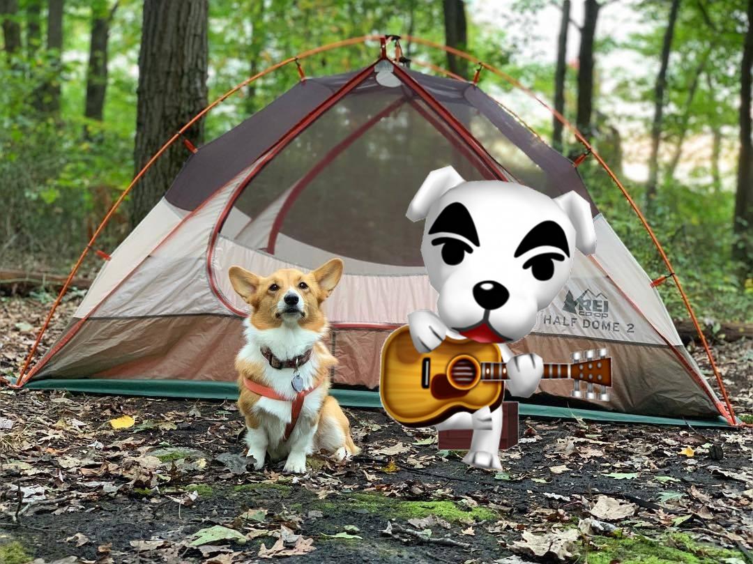 Animal Crossing Camping