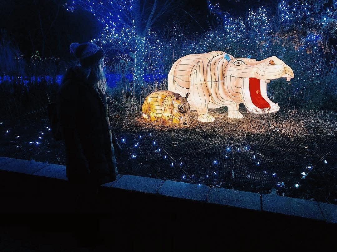 Zoo Festival of Lights Fiona