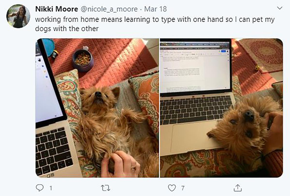 "Working from home with dog, text says ""Working from home means learning to type with one hand so I can pet my dogs with the other."""
