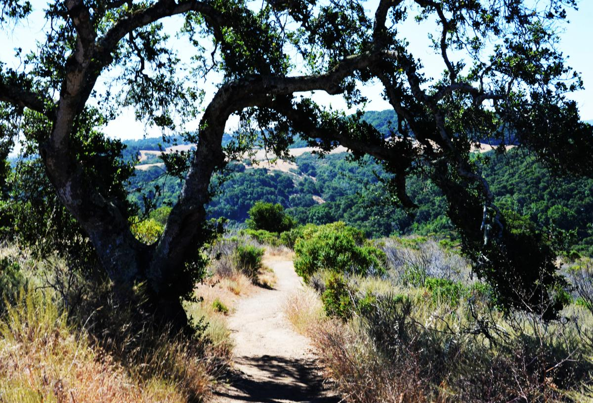 Hiking tail at Pulgas Ridge Reserve in San Mateo County