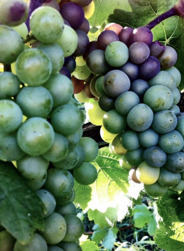 bel_lago_winery.jpg