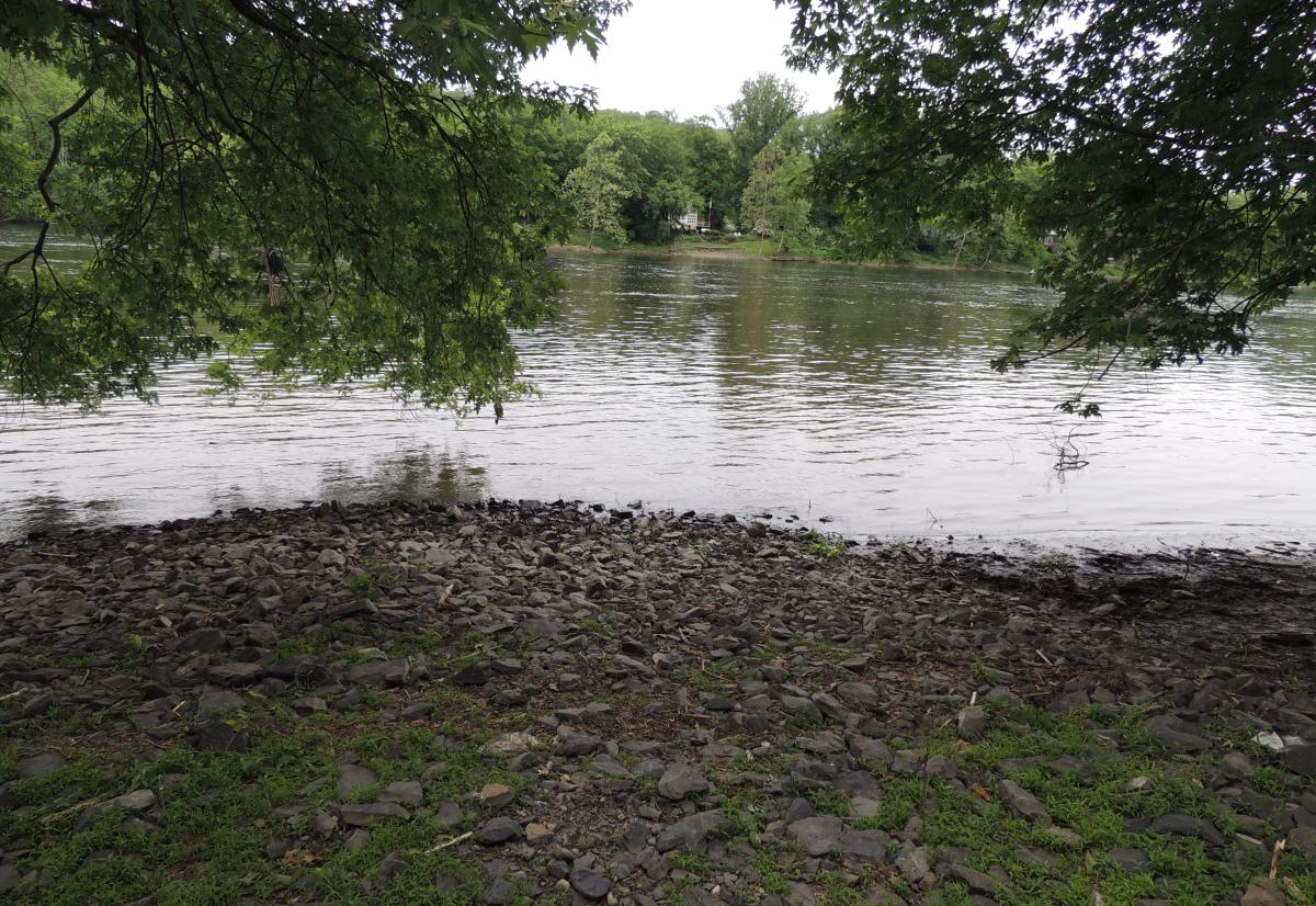 Trees on the Delaware River