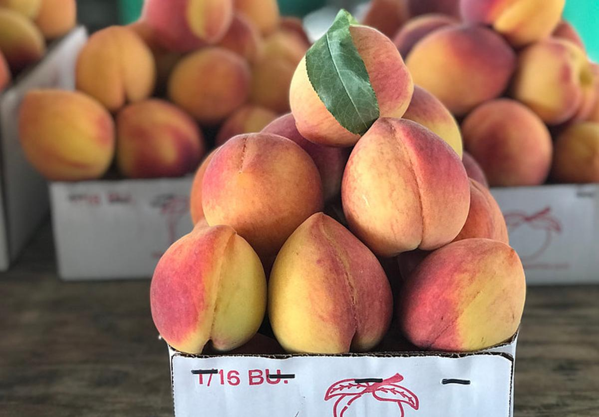 Vogel Orchard Peaches
