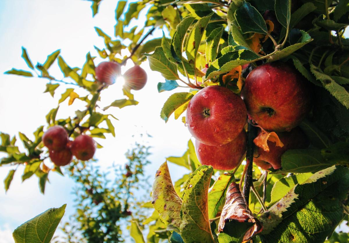 Eberlin's Orchard