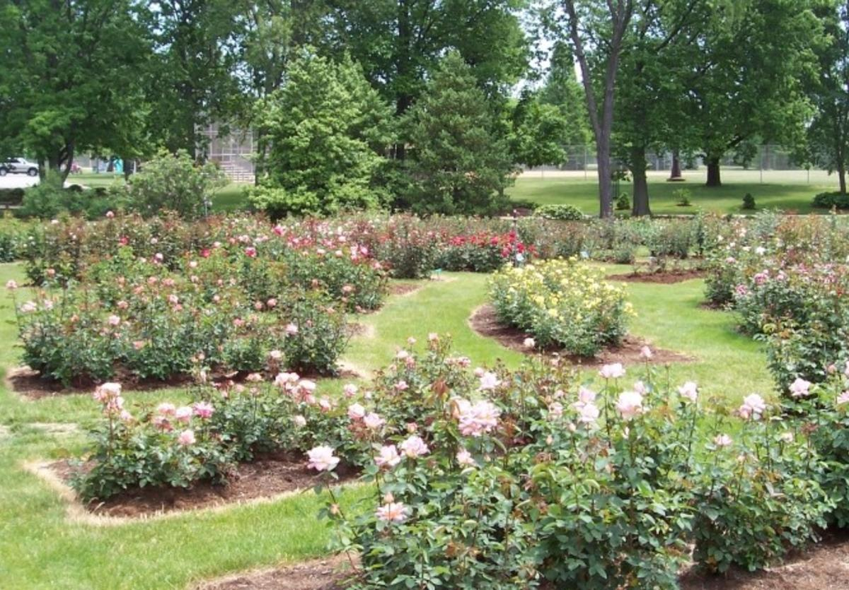 Nan Elliot Memorial Rose Garden