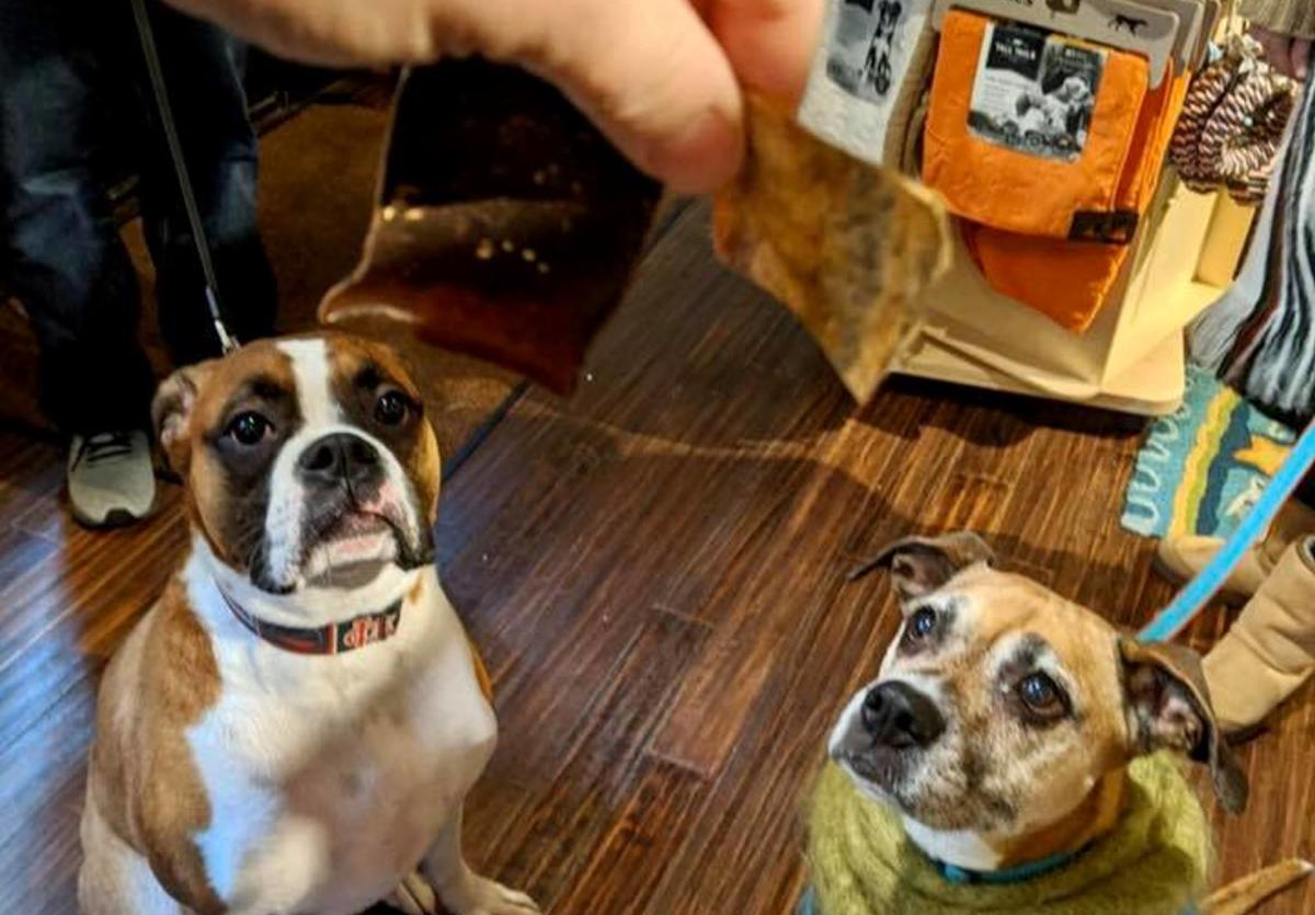 treats from four muddy paws