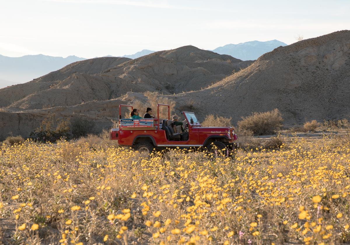 Red jeep driving through field of yellow flowers in Greater Palm Springs