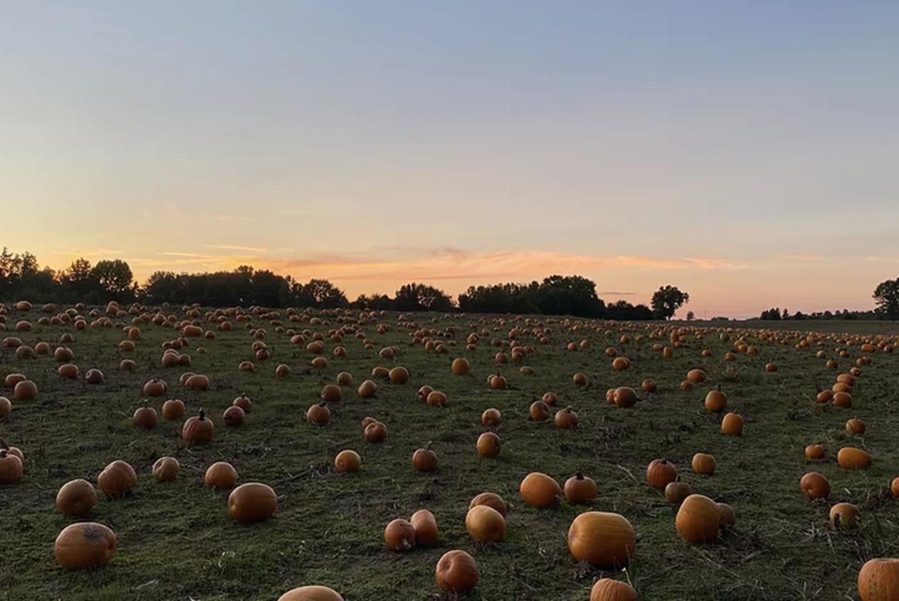 Cornutt Farms Pumpkin Patch