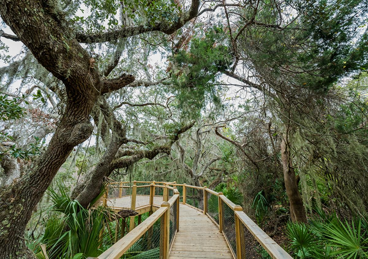 Elevated boardwalk surrounded by moss-covered trees at the Jekyll Island Trail System