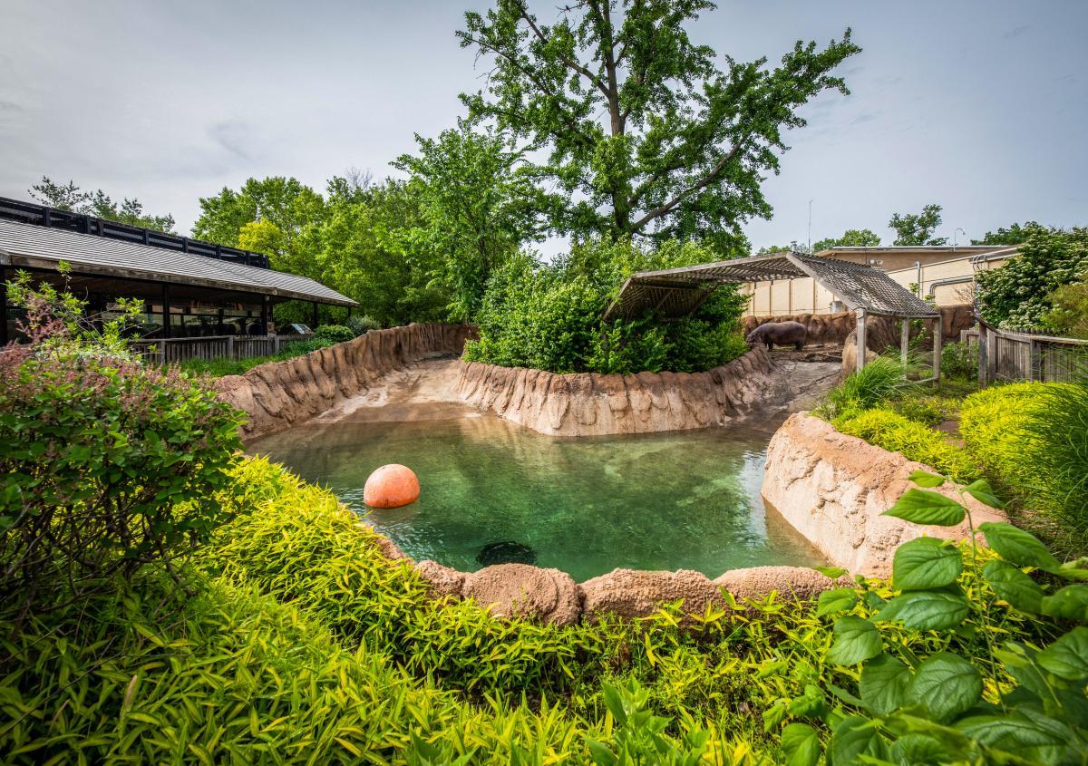 Hippo habitat zoo