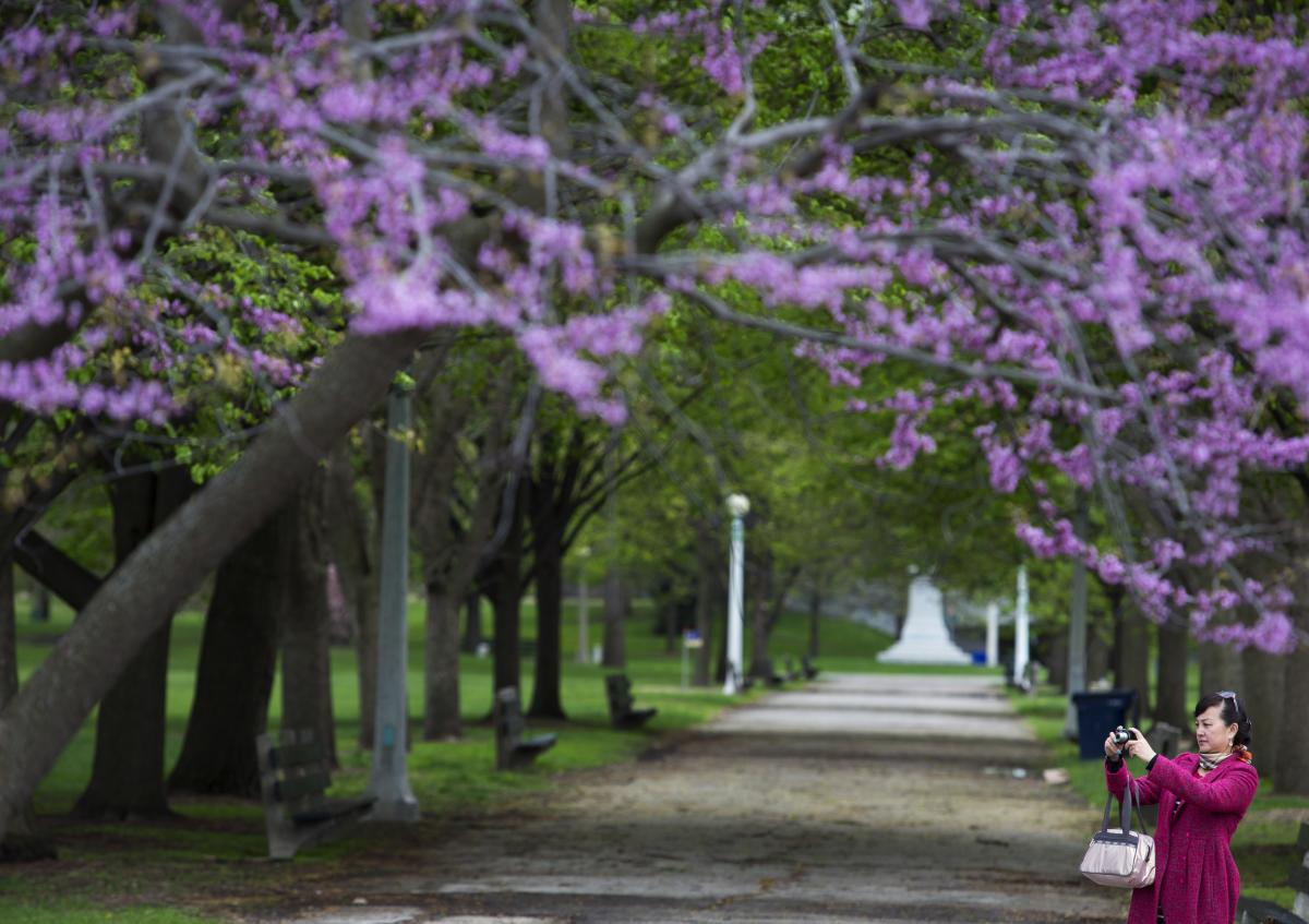 Spring blooms on trees at Lincoln Park in Chicago