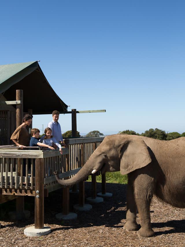 Monterey Zoo & Vision Quest Safari
