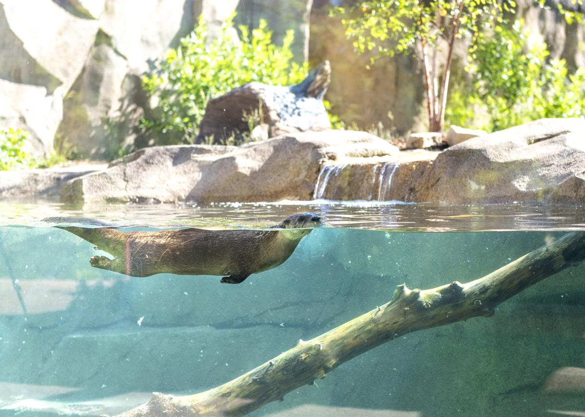North American River Otter Exhibit at Fort Wayne Children's Zoo