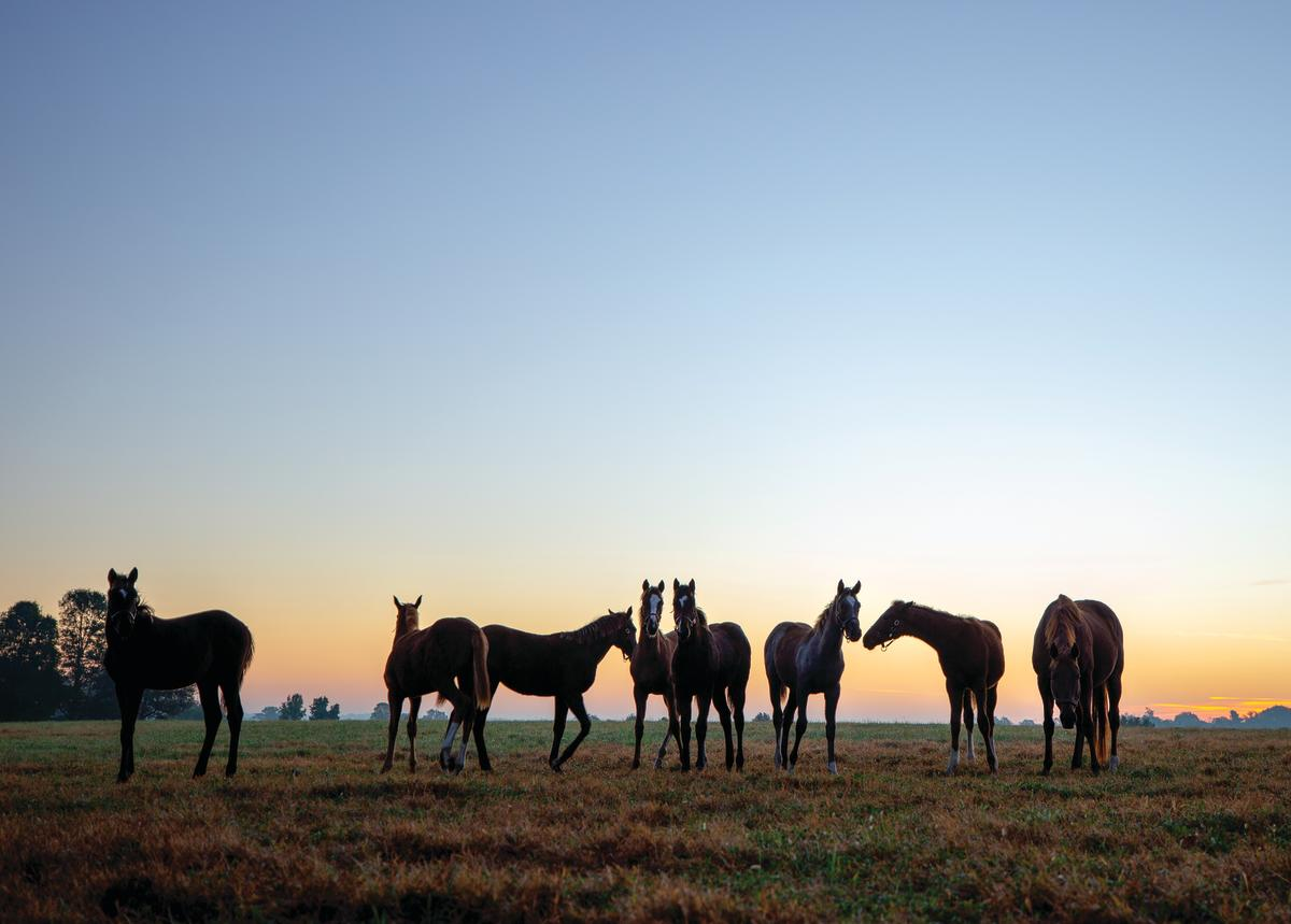 Fayette County Horse Farm