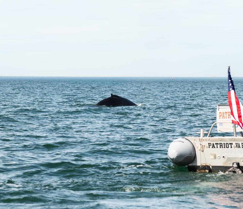 Whale & Patriot