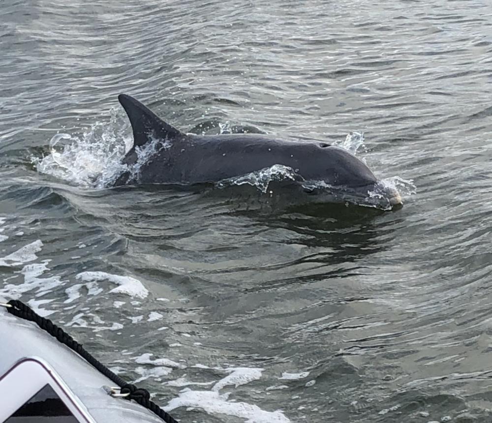 Dolphin next to Patriot