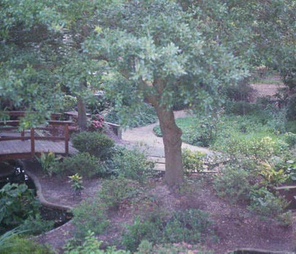 ARE-meditation-garden