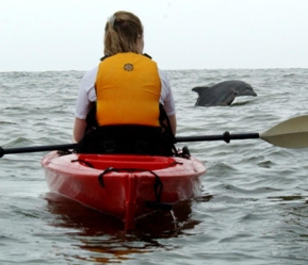 Dolphin Adventure Tour