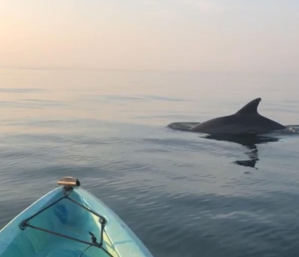 Sunset Dolphin Tour