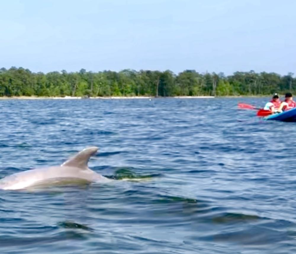 Dolphin Tours in Virginia Beach