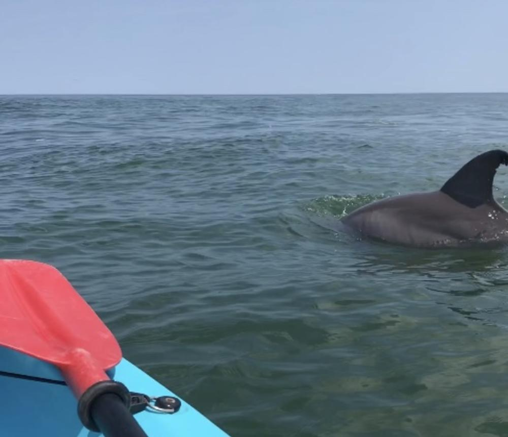 Dolphin tours in Virginia Beach