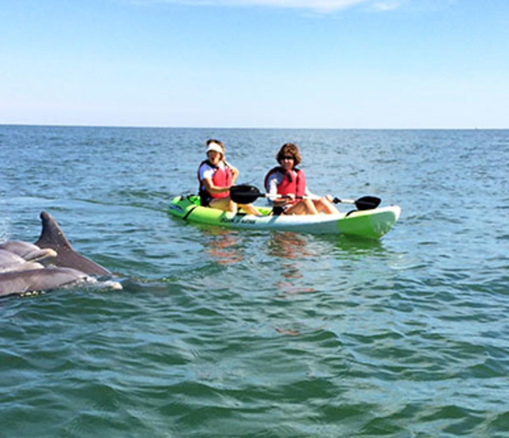 Kayak Dolphins