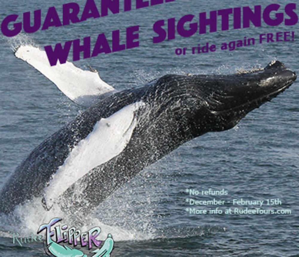 whale_guarantee0.jpg