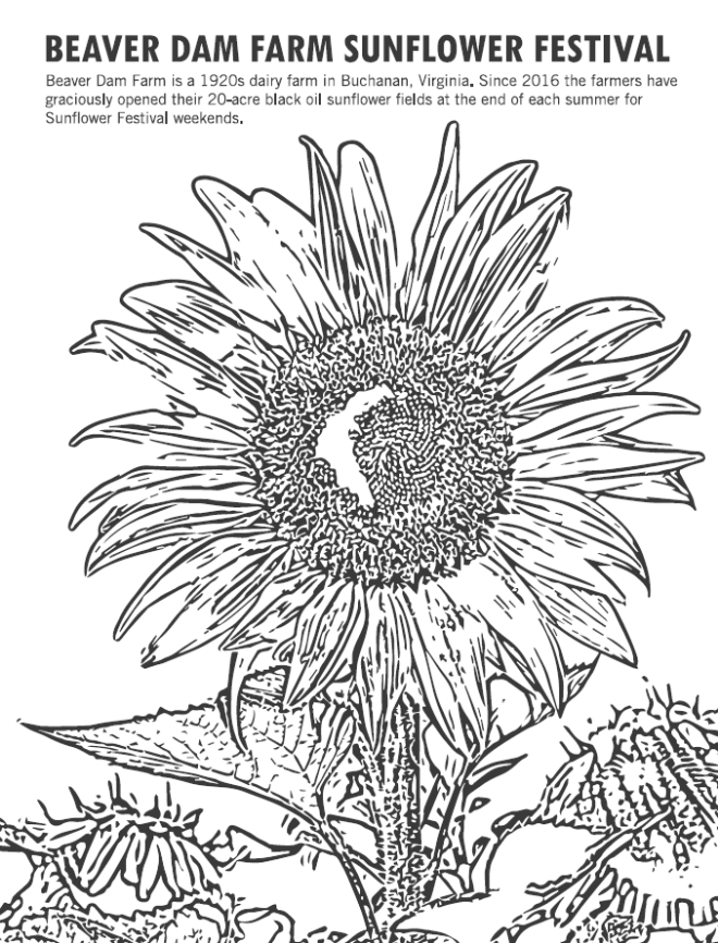 Beaver Dam Farm Sunflower Festival - Coloring Sheet