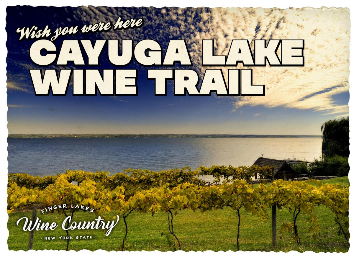 Cayuga Lake Wine Trail Postcard