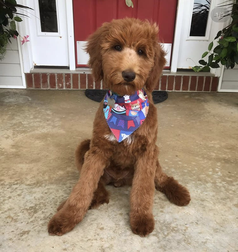 River the dog with bandana on front porch