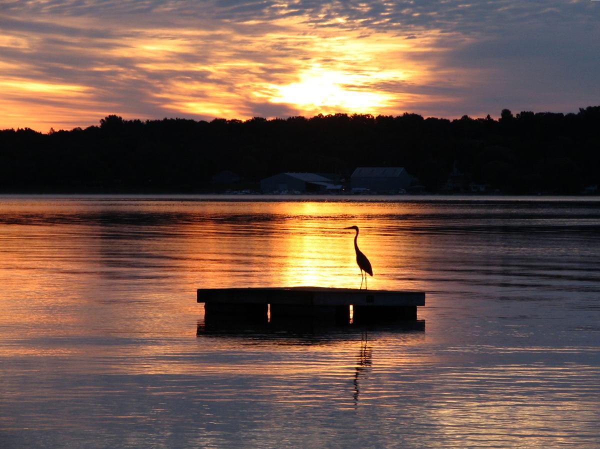 Heron Sunrise by Nancy Peek