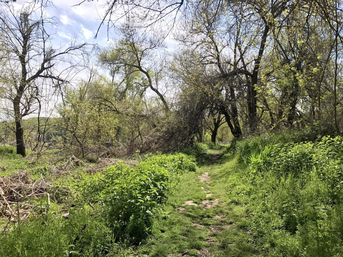 Fontenelle Forest trail