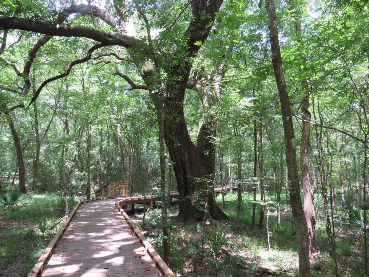 Acadiana Park Nature Station Walking Trail