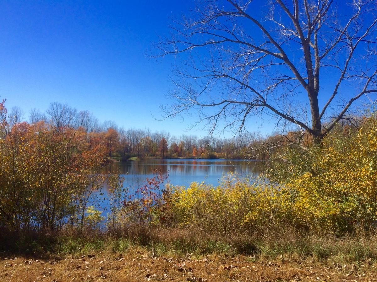 Bowman Lake at Fox Island in Autumn