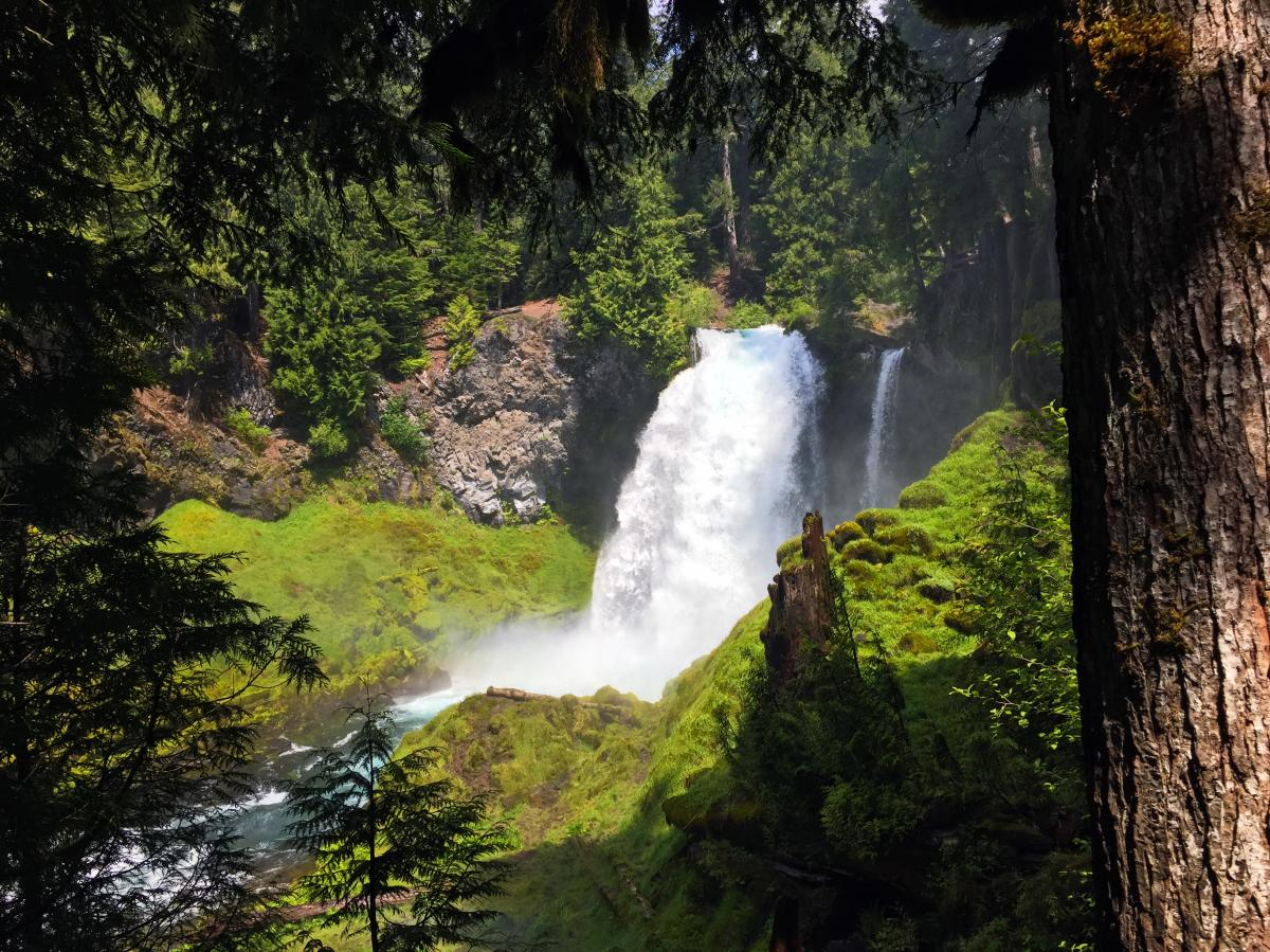 Sahalie Waterfall, McKenzie River by Sally McAleer