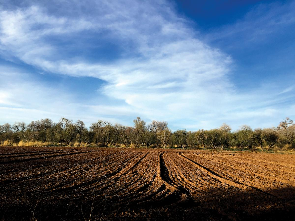 Life in Corrales, small town farming