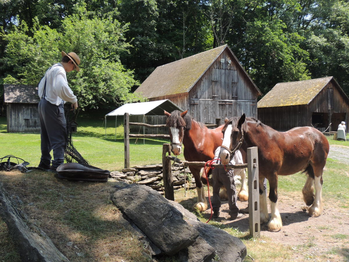 Harnessing the Horses for a Wagon Ride at Quiet Valley