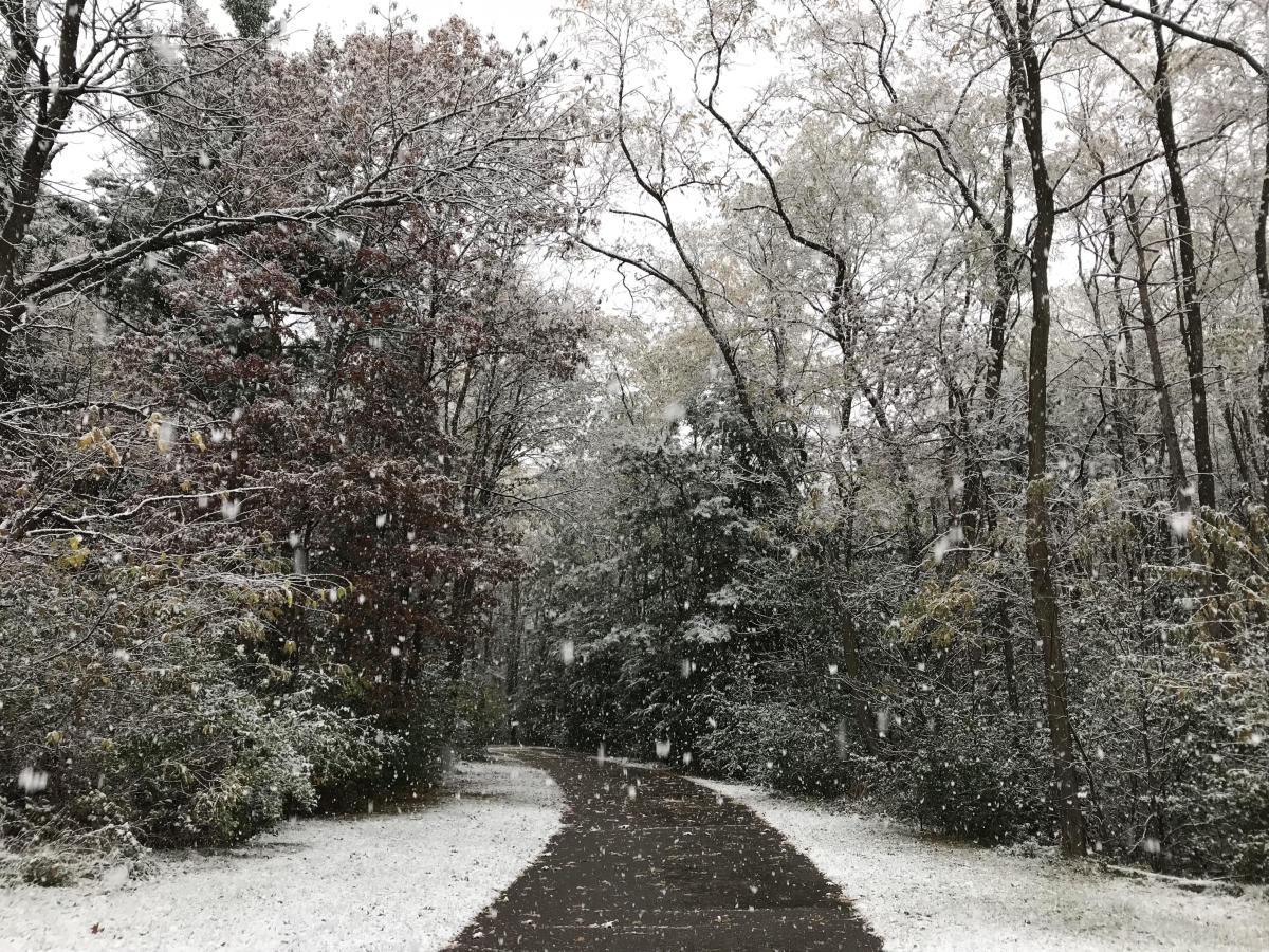 Bluffton Park Snow