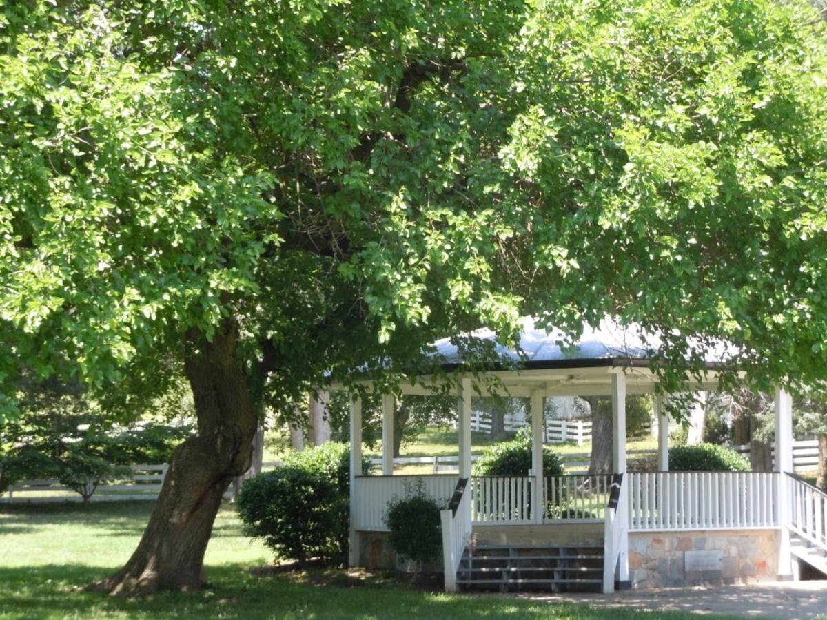 gazebo and tree at Merchant Park
