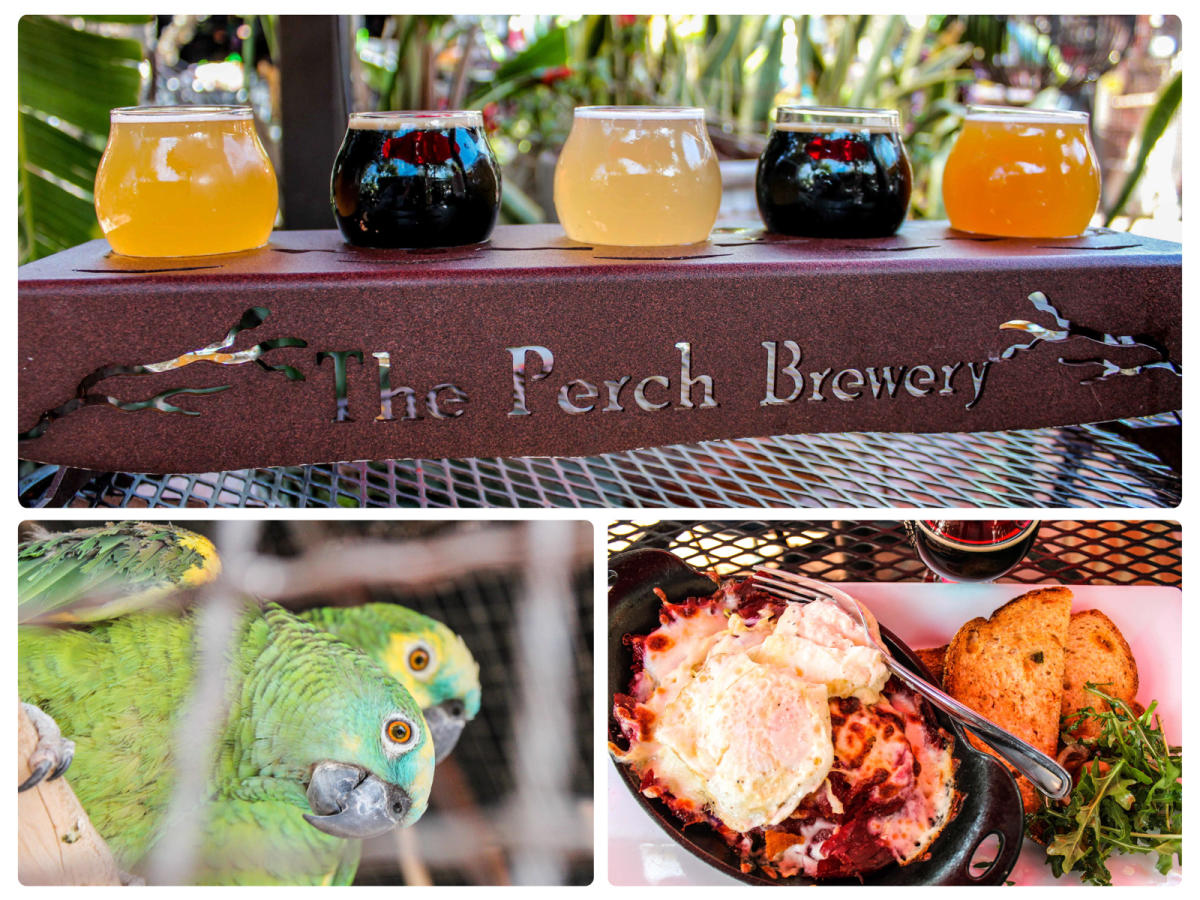 The Perch - Beer flight, parrot and food collage