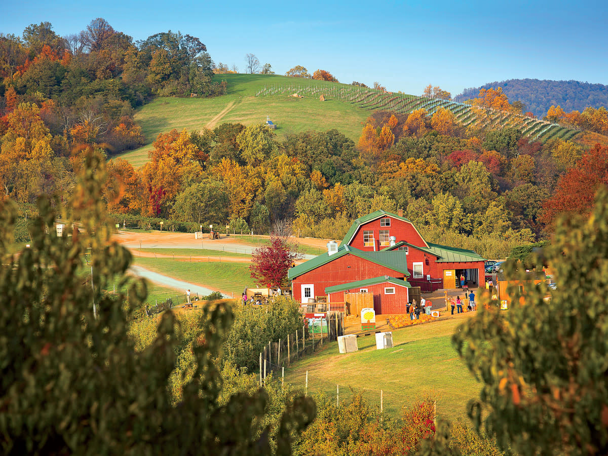 Carter Mountain Orchard in fall