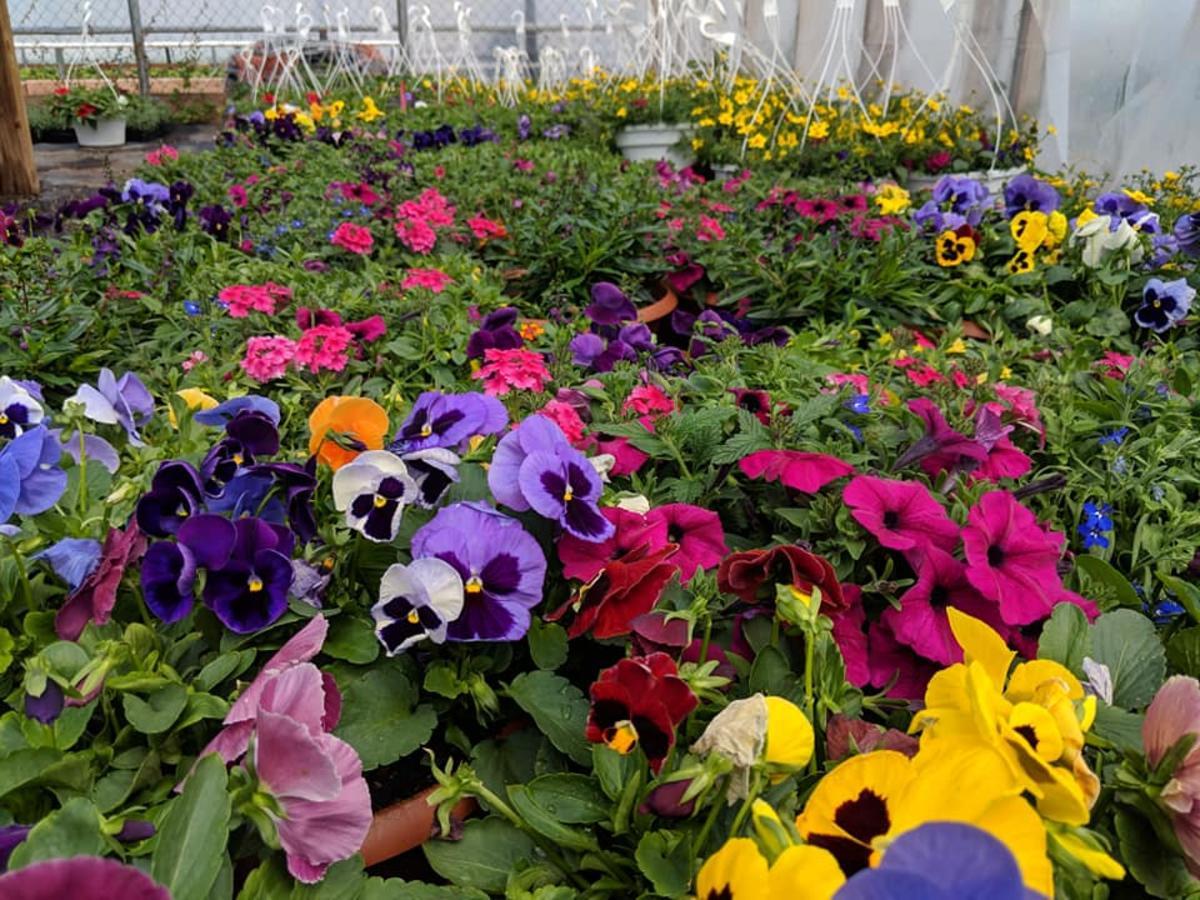 Garden Sweet Colorful Flowers