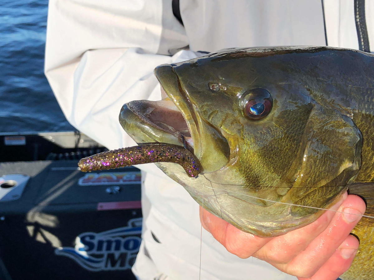 Angler Mark Romanack of Fishing 411 TV shows off a trophy smallmouth bass caught on Saginaw Bay